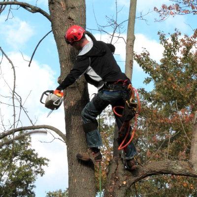cutting a tree
