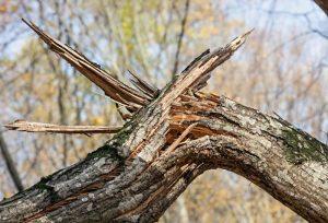 Treescape Emergency tree removal Gastonia
