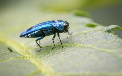 Tree Pests You Need To Be On The Lookout For