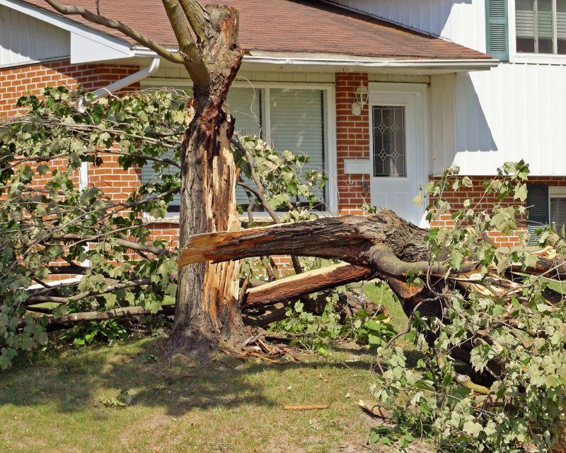 Treescape tree inspection