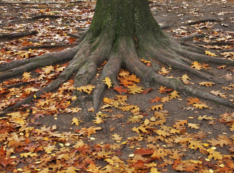 Treescape tree roots