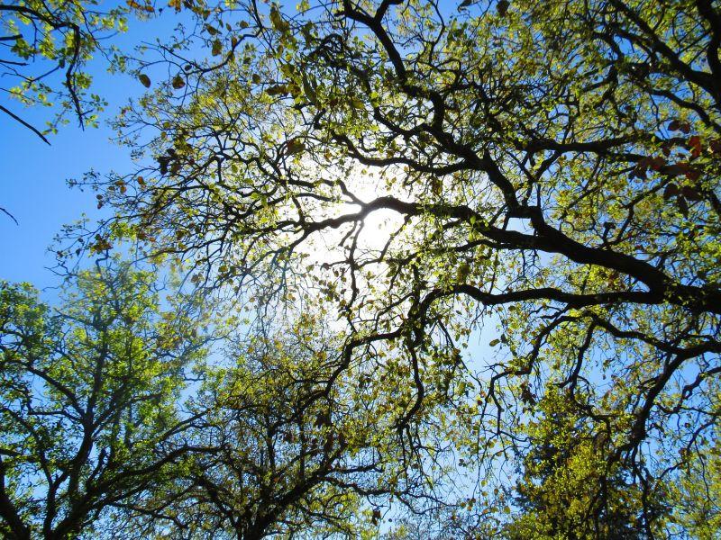 Treescape tree service