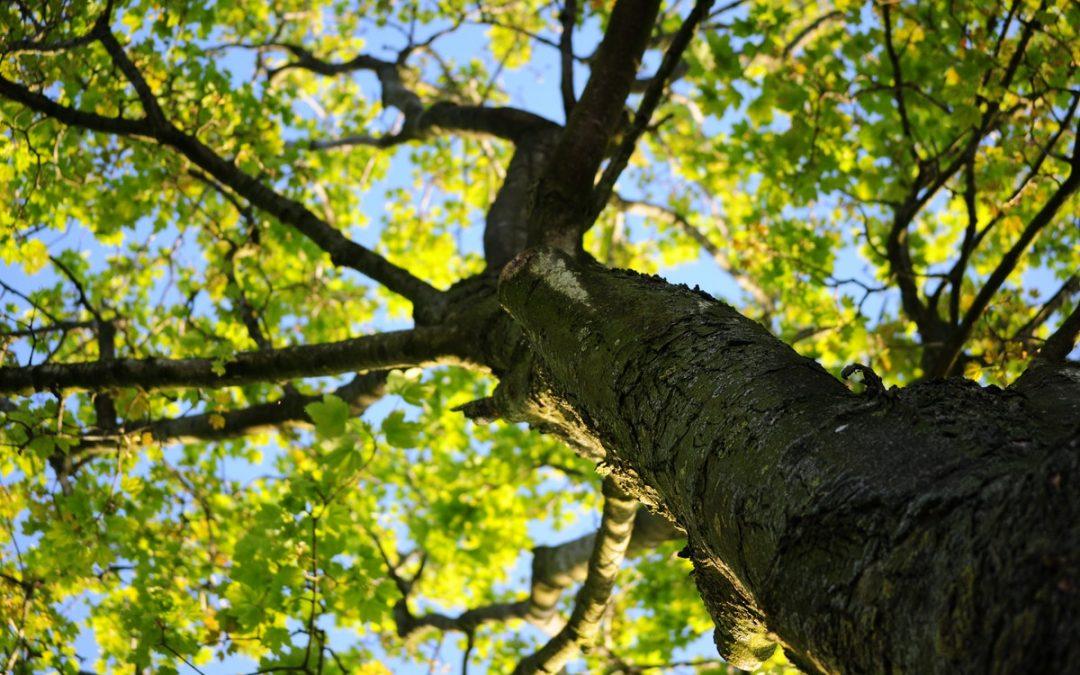 misshapen tree