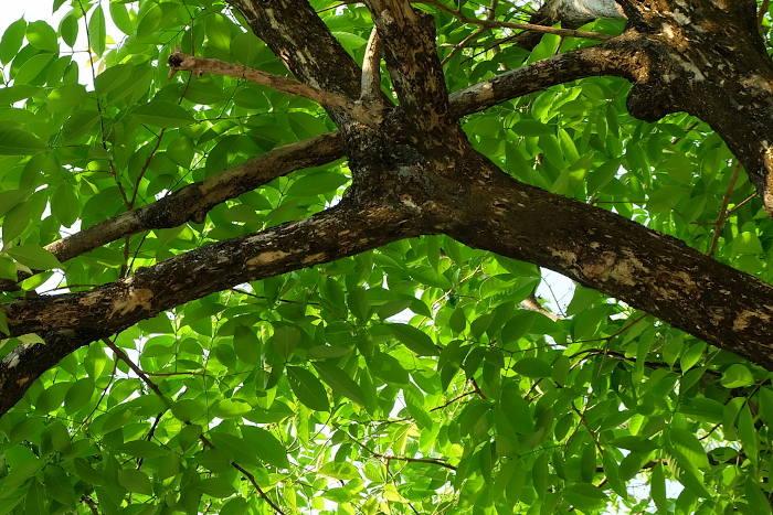tree inspection charlotte