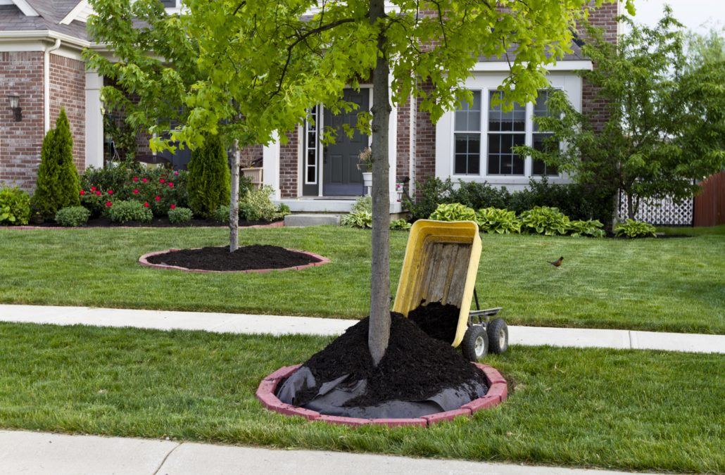 6 Do's and Don'ts of Mulching Your Trees