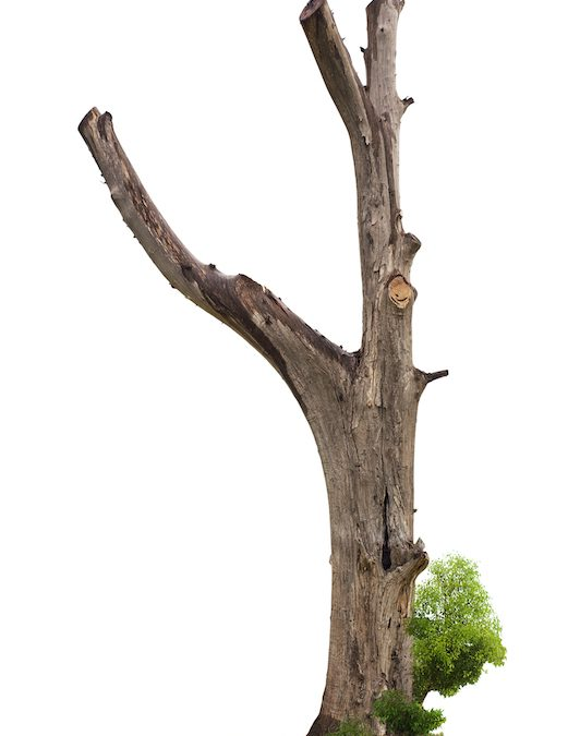 Is Trimming Dead Branches Actually Good for a Tree?